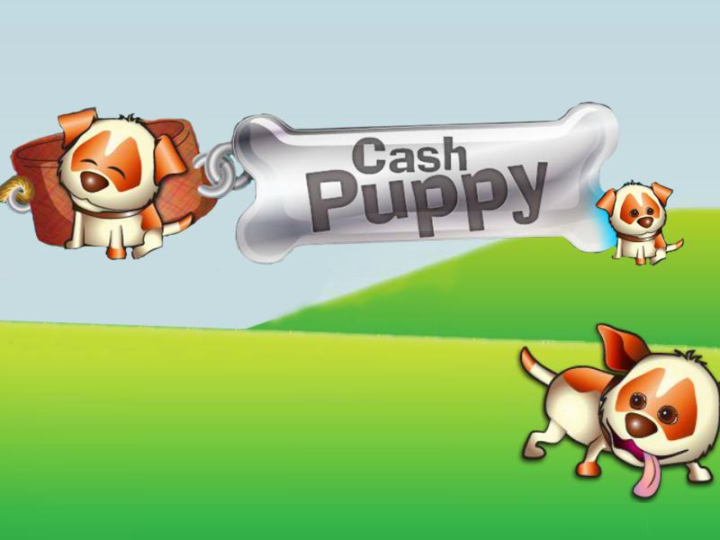 Cash-Puppy-Saucify
