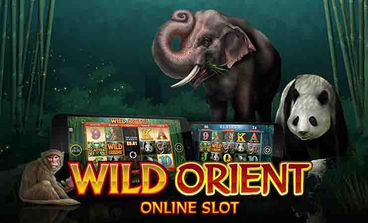 Wild-Orient