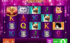 Cutie Cat kostenlose spiele ohne anmeldung